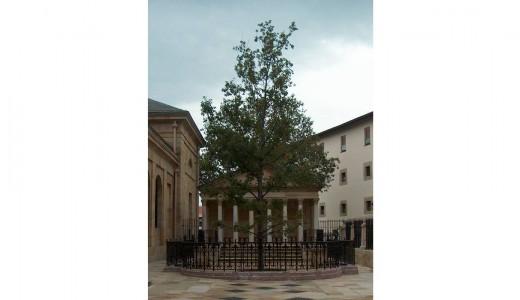 Casa de Juntas y Arbol de Gernika